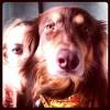 Аманда Сейфрид и ее пес