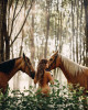 Анфиса Чехова снялась полностью голой и с двумя конями!