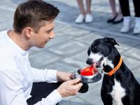 Сергей Лазарев открывает магазин для животных