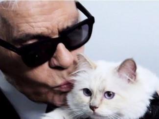 Карл Лагерфельд со своей кошкой Шупетт