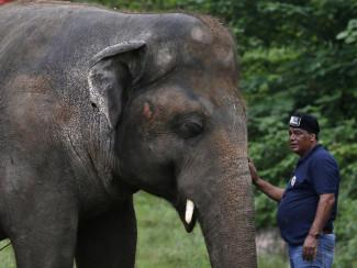 Певица Шер спасла одинокого слона